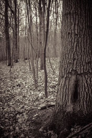Beauty In Nature Black & White Black And White Branch Day Forest HOLE IN TREE TRUNK Landscape Lots Of Leaves Monochrome Nature No People Outdoors Scenics Tranquil Scene Tranquility Tree Tree Trunk Trees Wilderness Area WoodLand WoodLand