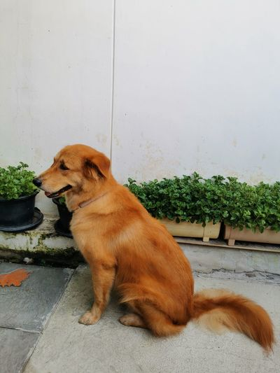 Dog looking away while sitting on wall