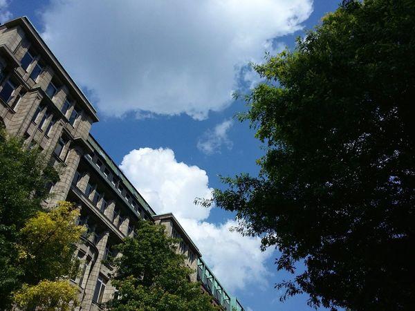 Hamburg Clouds. · Germany 040 Hamburgmeineperle Mönckebergstraße Summer Blue Sky Clouds And Sky Up Framed By Trees Urban Landscape Summer Photography