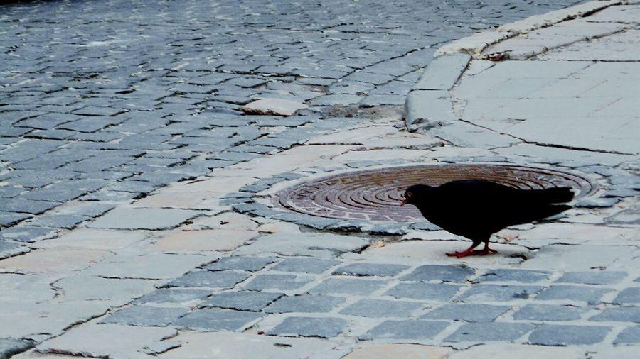 Bird Photography Streetphoto Modern Style