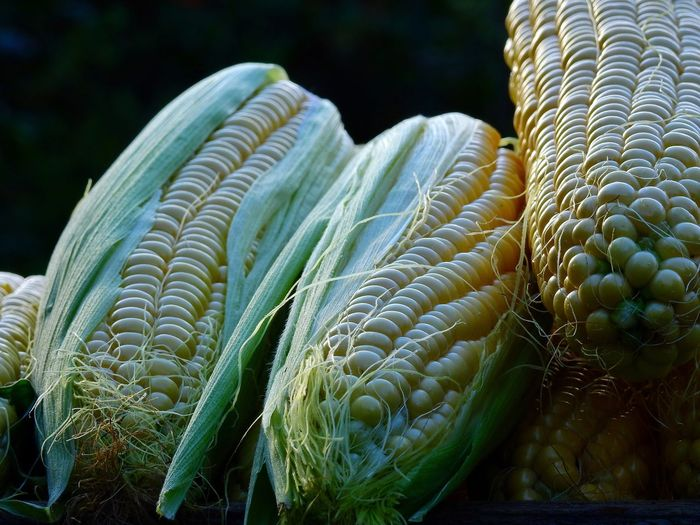 Cob Corn Corncob Fresh Vegetables Vegetarian Food Harvest Time Harvest Local Food Farm Life Season  Delicious Fresh Produce Fresh On Eyeem  Freshness Crisp