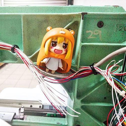 As Umaru walks along the electrical pathway she discover broken cables and investigate further.. Umaru Umaruchan Himoutoumaruchan Nendoroid Nendoroids Xperia_knight