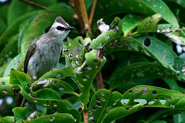Close-up of bird perching on plant