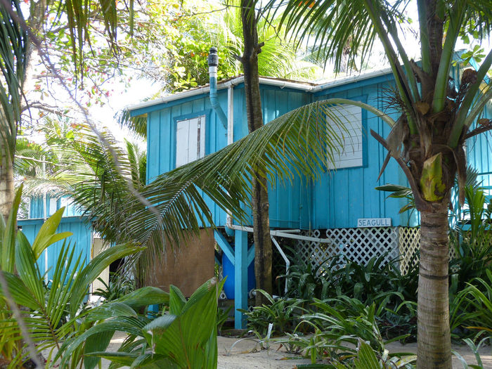 Architecture Blue Built Structure Cabaña Day Green Belize  Travel Photography Traveling Travel Growth Island Home Nature No People Outdoors Palm Tree Plant Residential Building Sky Tree Tree Trunk