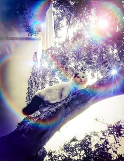 Rainbow cat ,black and white , tree, vivid by elvio Vintage Style Eyembestseller EyeEmBestPics EyeEm Best Edits EyeEm Best Shots Eyem Gallery Outdoors Eyem Best Shots Nature_collection Eye Em Nature Lover Cats Of EyeEm Pet Photography  Tree Eyeem Photography Vintage Photo EyeEmNewHere Beautiful Artphotography EyeEmNewHere Art Is Everywhere EyeEm Diversity