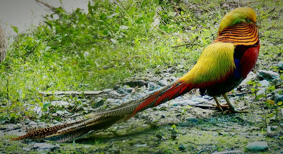 One Animal Animal Themes Bird Grass Nature No People Beauty In Nature Animals In The Wild Mammal Close-up Bird Of A Thousand Colours Multi Colored Beauty In Nature Creations Of The Almighty