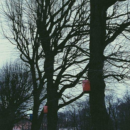 Saintpete Trees