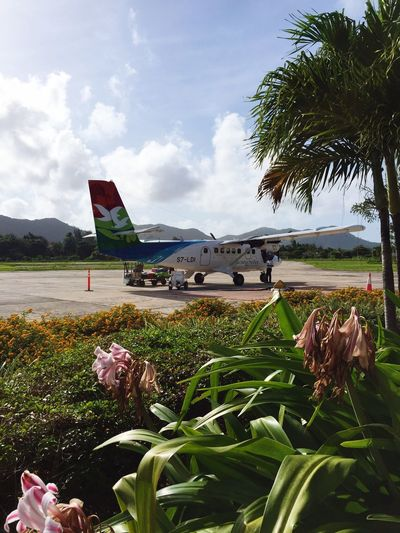 Seychelles Airplane Sky Transportation Mode Of Transport Day Air Vehicle Cloud - Sky Plant Outdoors No People Grass Airport Nature Palm Tree Seychelles Seychellesisland Seychelles Nature Photooftheday Photography Nature Photography Nature Nature_collection Instagood Instadaily Picoftheday