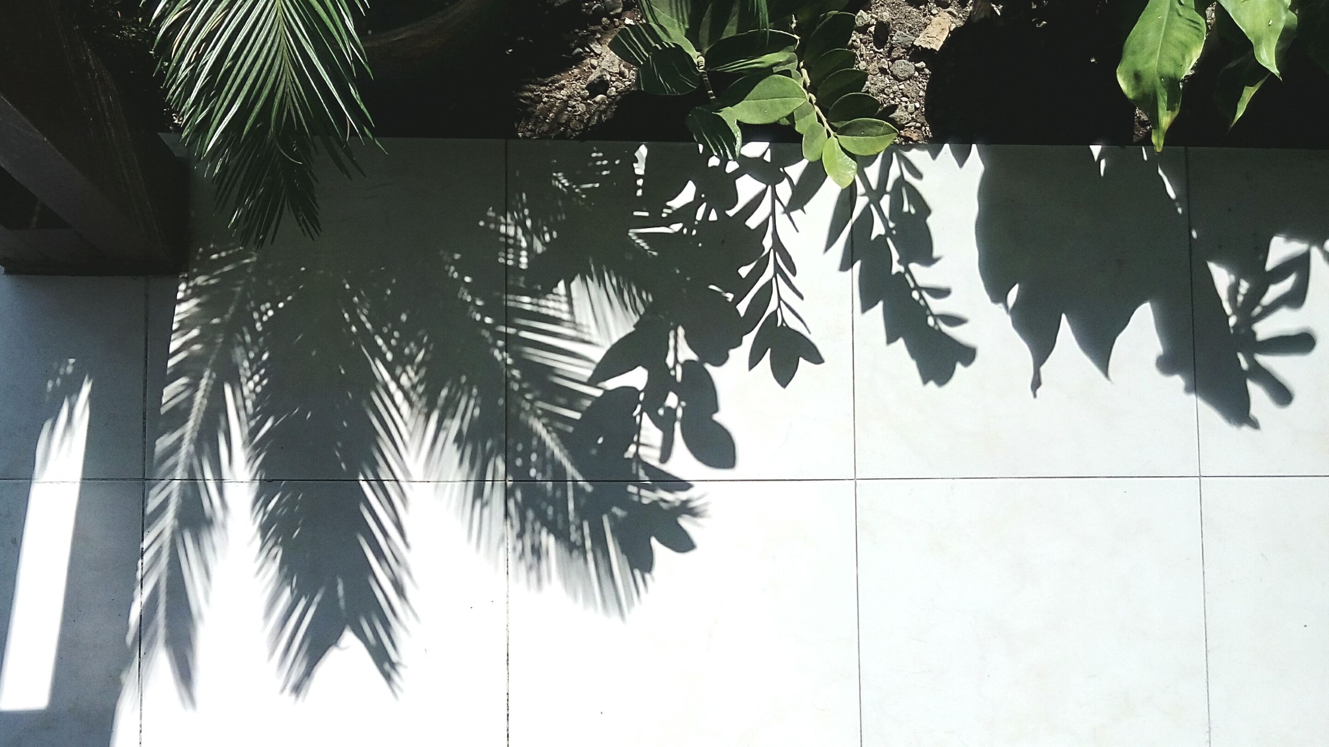 leaf, low angle view, palm tree, tree, growth, hanging, day, plant, no people, green color, indoors, nature, close-up