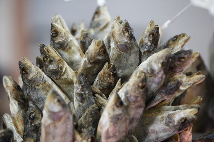 Close-up of dead fish for sale at market stall