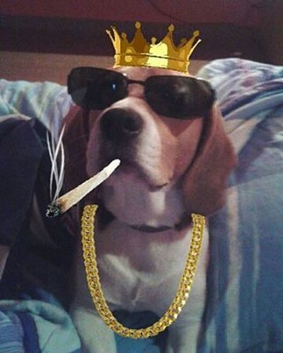 ErKing 💲 Shaggy Beagle