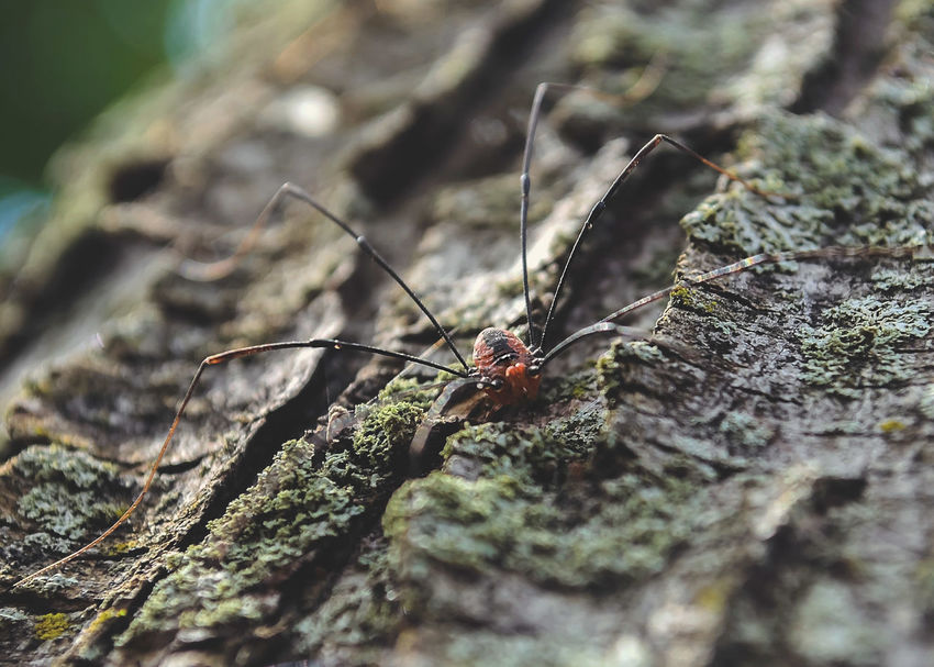 8 Animal Themes Animal Wildlife Animals In The Wild Arachnid Photography Arachnophobia Beauty In Nature Close-up Day Insect Macro Macro Photography Nature No People One Animal Outdoors Spider Taking Photos Tree Bark Tree Bark Colors Tree Bark Patterns Tree Bark Texture EyeEmNewHere