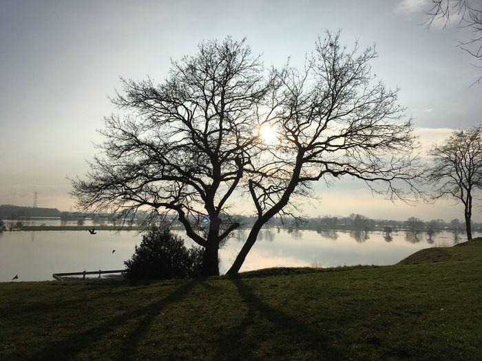 Arnhem, The Rijn River | High water EyeEmNewHere Still Life Water Winter Netherlands Rijn High Water Tree Tranquil Scene Outdoors No People Sky Day