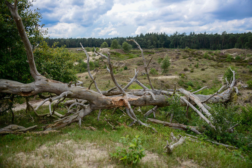 Tafelberg hiking route in Hulshorst the Netherlands Hulshorst Netherlands The Netherlands Beauty In Nature Cloud - Sky Dead Tree Forest Hiking Trail Holland Landscape Nature No People Outdoors Sky Tafelberg Tranquil Scene Tranquility Tree Wood - Material