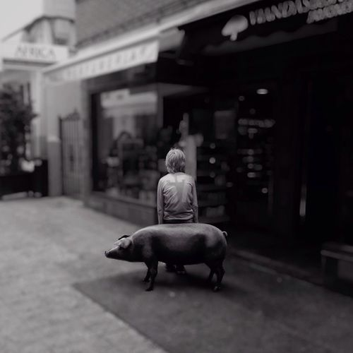 Rear view of person leaning against pig statue