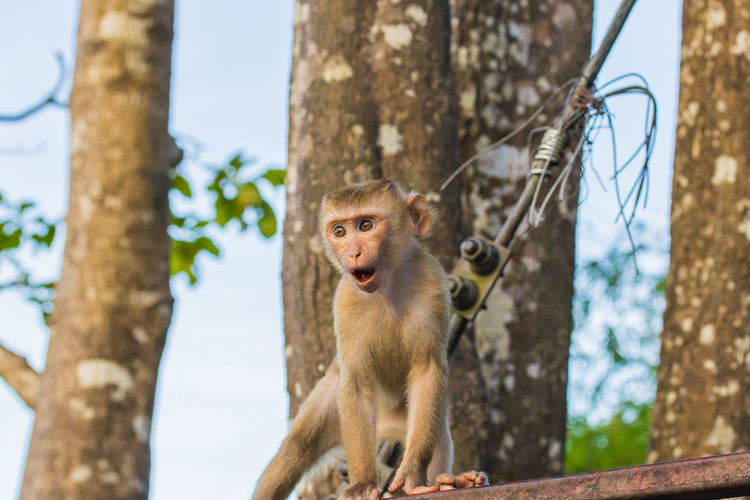 Low angle view of monkey on tree trunk