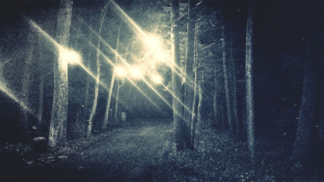 Creepypasta Scary Places Check This Out Rural Out In The Wilderness In The Forest Treescollection Into The Woods