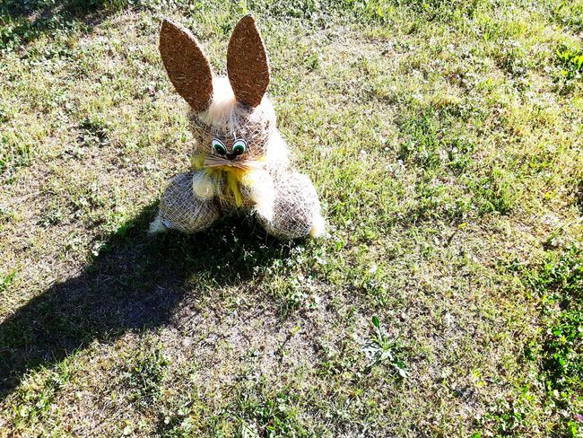 Easter bunny Sunlight High Angle View Outdoors Grass Animal Themes Nature Pets Bunny 🐰 Bunny  Easter Easter Bunny Easter Ready Wicker Work