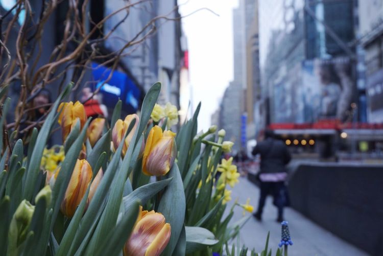 Herald Square Focus On Foreground City Close-up Freshness Plant Flower Flowering Plant