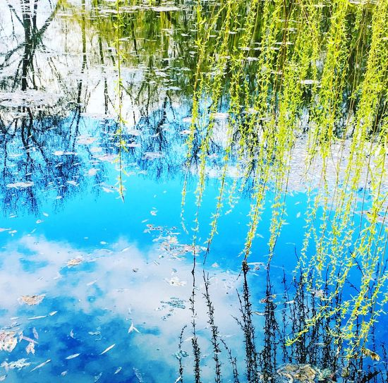 Spring Spring Is Coming  Water Reflections Water_collection Mirrored Blue