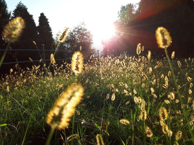 Growth Nature Sunlight Outdoors Field Plant Grass