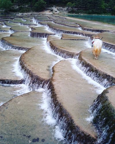 Water Nature Day Outdoors No People Tranquility Landscape Scenics Beauty In Nature Yunnan Yunnan ,China China Photos Travel Destinations Nature Animal Travel China 大陸 雲南 麗江 玉龍雪山 藍月谷 犛牛