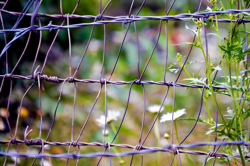 Fence Fence Closeup Fence With Bushes Green Nature Outdoor Photography Wire Fence Wire Fence Pattern Wire Fencing