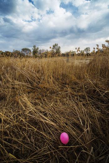 衰草尤秋色,新绿上林间,周末学少年,公园看春天。 spring Cloud - Sky Nature Grass Outdoors Bolloon Weeds Field