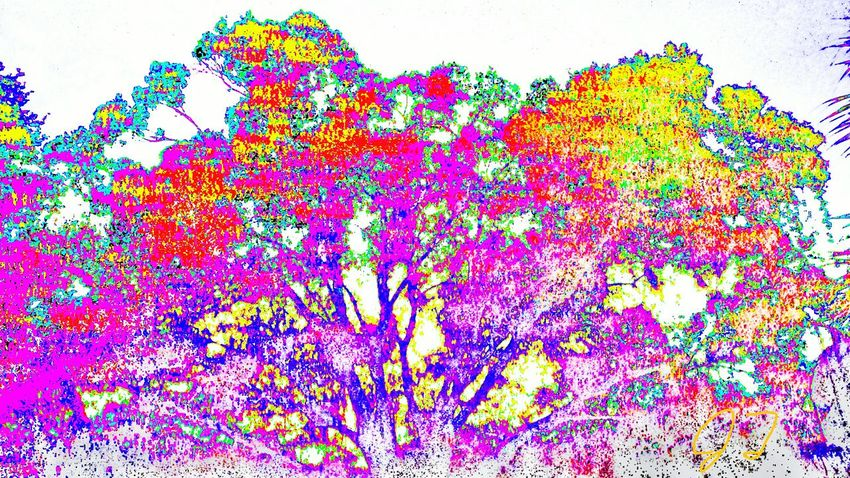 """""""Color Tree 2"""" The Innovator The Innovator Bright Magic Artphotography Art Photography Effect Multi Colored Multicolored Colors Color Colorful ManyColors Surreal Computer Art Electronic Art"""