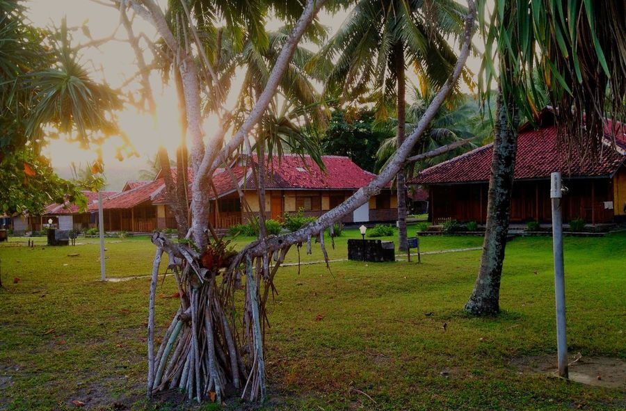 Sunset Ocean Queen Resort Tree Grass Built Structure House Architecture Building Exterior Palm Tree Thatched Roof Green Color No People Outdoors Growth Day Tree Trunk Beauty In Nature Nature Sky