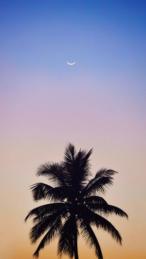 Coconut tree Tree Clear Sky Palm Tree Moon Space Astronomy Blue Bird Flying Sunset Single Tree Crescent Treetop Solar Eclipse Long Shadow - Shadow Space Exploration Eclipse Spiral Galaxy Solar System Globular Star Cluster