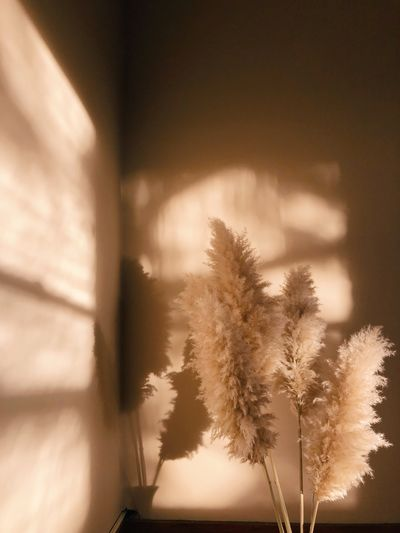 Pampas grass interior decor in evening sunset light Design Light Light And Shadow Window Plant Warm Interior Design Interior Pampas Grass Golden Hour Golden EyeEm Selects Plant Tree No People Nature Sky Window Day Focus On Foreground Growth