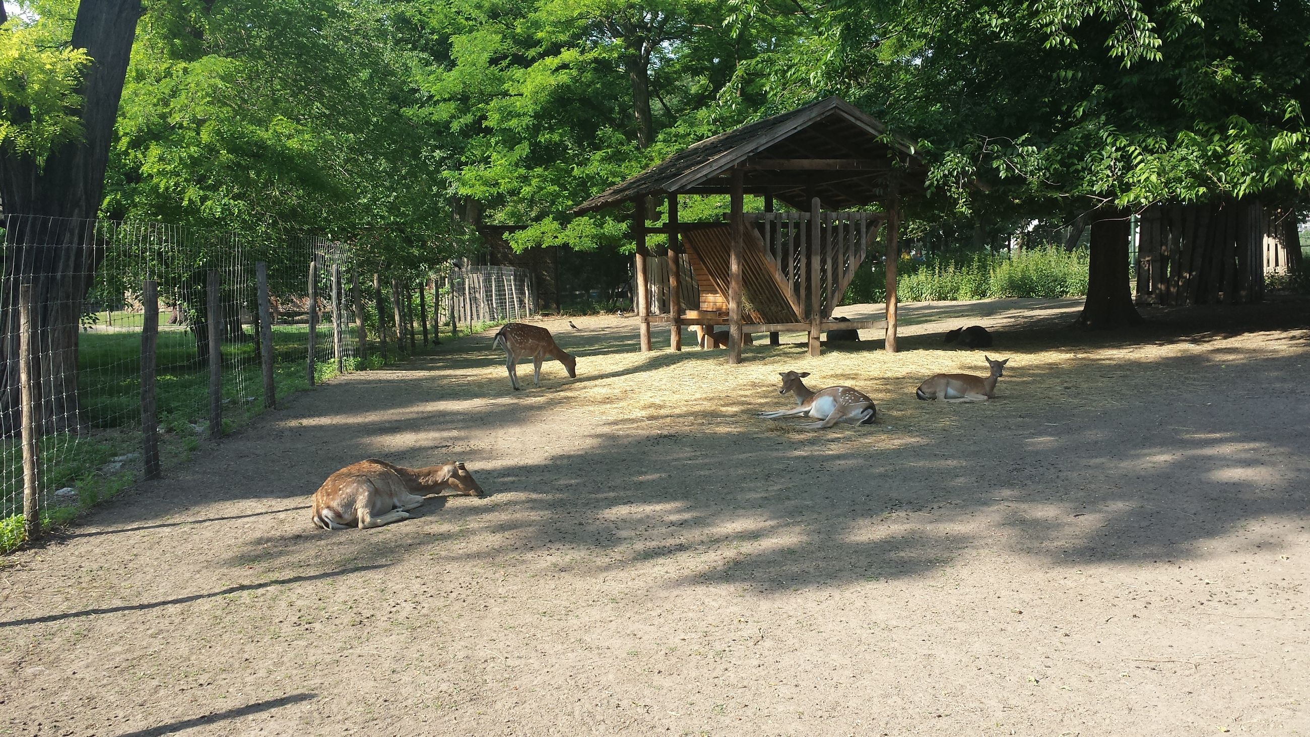animal themes, tree, mammal, built structure, domestic animals, one animal, architecture, building exterior, wildlife, animals in the wild, sunlight, park - man made space, day, outdoors, nature, pets, house, shadow, dog, two animals