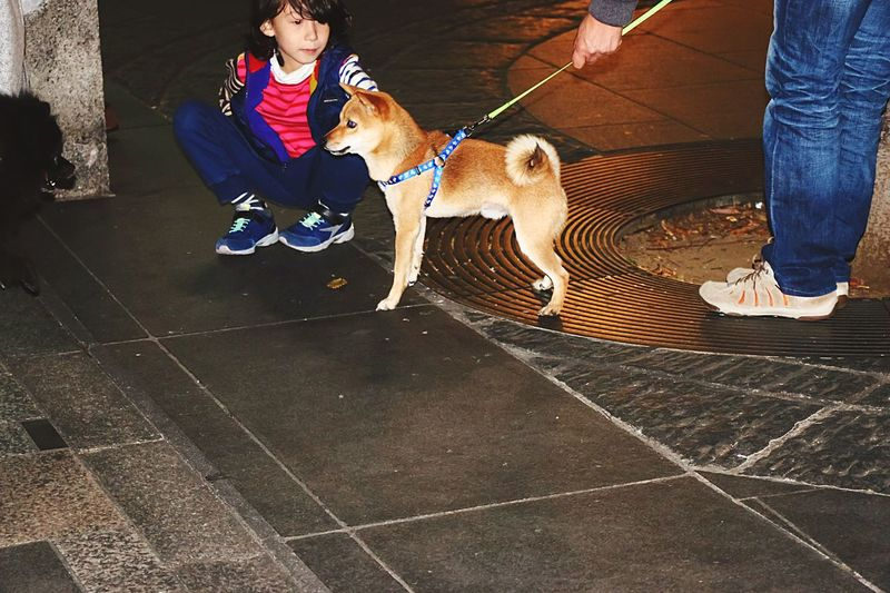 Q Cuteness Cute Kids Cute Pets Tokyo Street Photography Cuteboy Cute♡ Street Photography Ontheroad Light In The Darkness Urban Photography Creative Light And Shadow Urban Landscape Streetphoto EyeEm Best Edits Night Photography