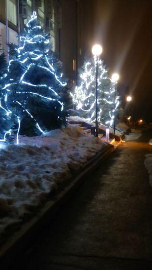 Winter Trees Evng_walk