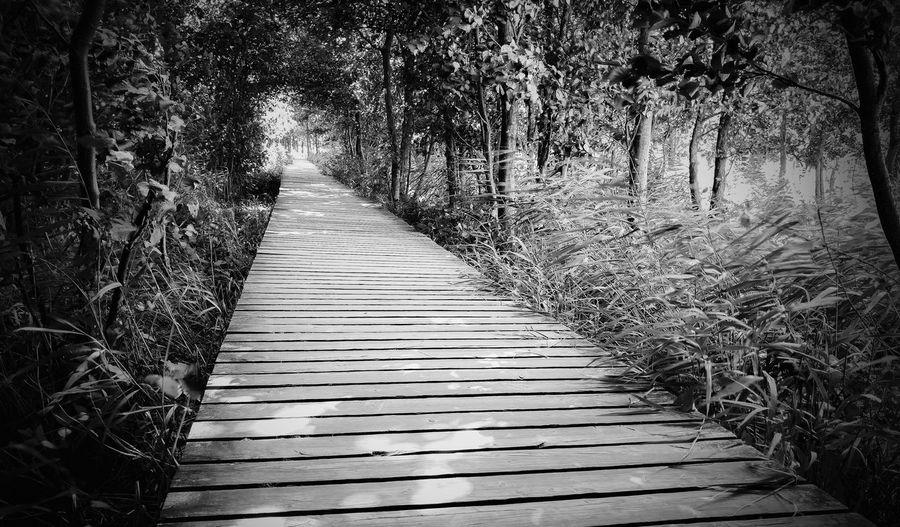 Surface level of boardwalk in park