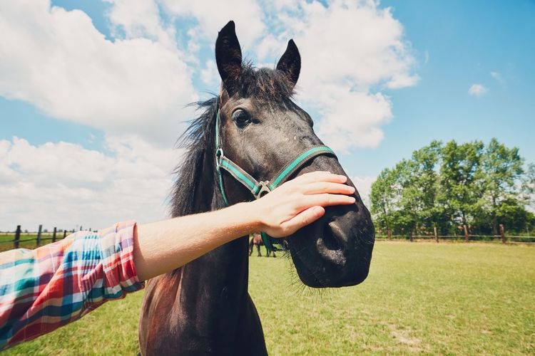 Summer day on the farm. Young man caress horse. Care Caress Countryside Farm Farm Life Farmer Hand Horse Horse Photography  Livestock Love Man Meadow Nature One Animal Outdoors Paddock Pasture People Ranch Ranch Life Real People Rural Scene Stroking Summer