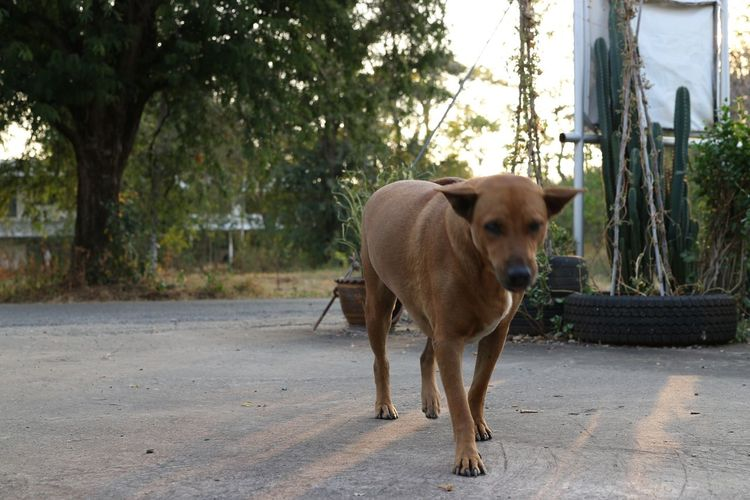 View of a dog standing on street