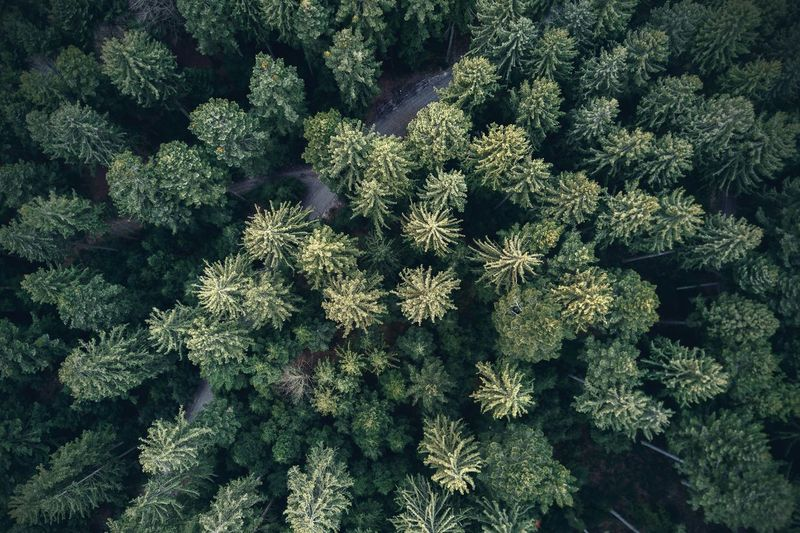 Beauty In Nature Dronephotography Forest Green Color Nature Outdoors Structure Tree Woods Flying High Perspectives On Nature