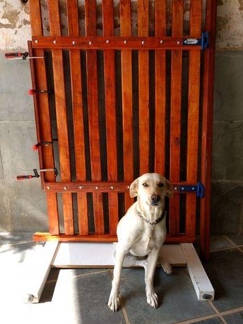 cão de guarda sim! Pet Models Eyeem Market Pet Portraits Petlovers Pets Dog Animal Themes Fence Gate