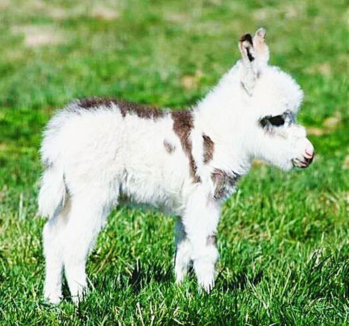 Donkey Animal Animal_collection Animal Love Sweet First Eyeem Photo
