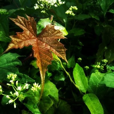 EyeEmNewHere Leaf Plant Nature Growth Green Color Outdoors No People Day Autumn Close-up Beauty In Nature Flower Flower Head Freshness