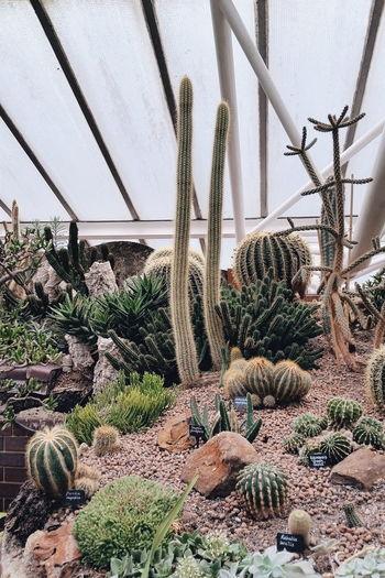 Cactus Cacti Nature_collection Vscocam Showcase: February EyeEmBestPics TheWeekOnEyeEM Conservatory