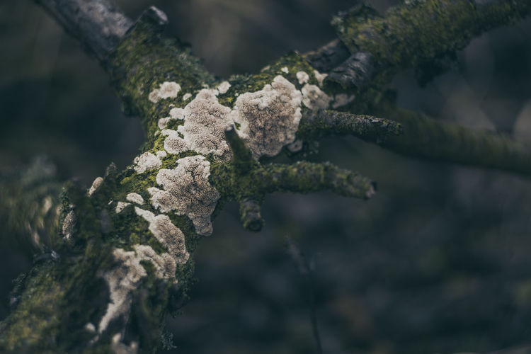 Helios Hungary Hungary🇭🇺 Vintage Photography Vintage Style Beauty In Nature Branch Close-up Day Focus On Foreground Fungus Helios44m Lichen Manual Focus Lens My Best Place Nature No People Old Lens Old Lenses Outdoors Tokod Tree Vintage Lens On Modern Camera Vintage Lens Photography Vintage Lenses Lover