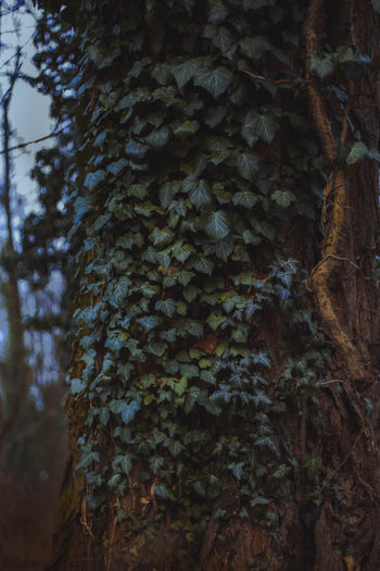 Beauty In Nature Close-up Day Forest Growth Moss Nature No People Outdoors Plant Tree Tree Trunk