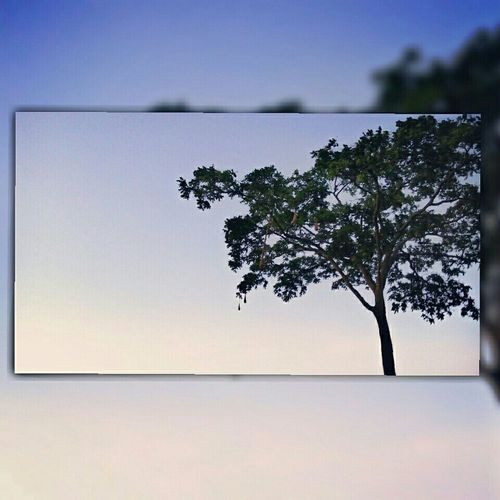 Treeart Landscape Naturelovers Landscape_photography Tree Treelovers