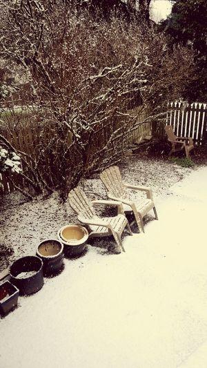 First snow! Ttown Tacoma_WA PNW PNWonderland First Snow Mybackyard