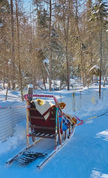 Sled Dog Snow Cold Temperature Winter Nature Day No People Tree Transportation