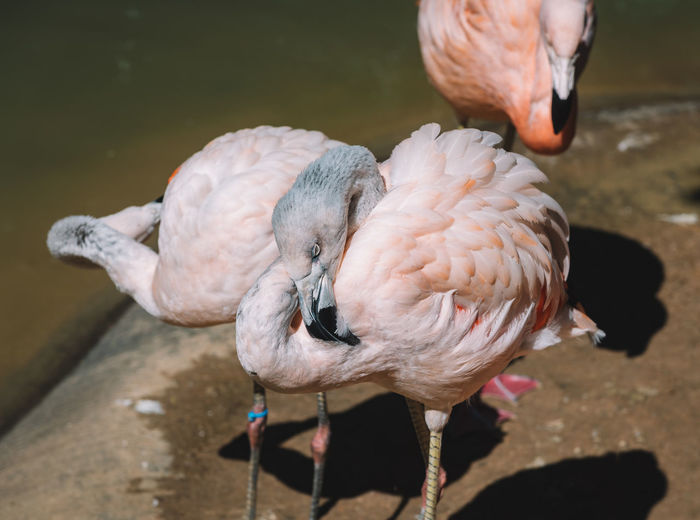 Flamingo Animal Themes Animal Wildlife Animals In The Wild Beauty In Nature Bird Close-up Day Lake Nature No People One Animal Outdoors Perching Water