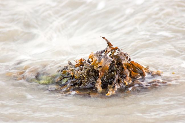 Seaweed brought to the shore by the tide. Ocean Scenics - Nature Pattern Submerged Green Color Brown Nature_collection EyeEm Best Shots Multi Colored Wet Selective Focus Clump Of Seaweed Rippled EyeEm Selects Sea Water Beach Land Sand Nature Beauty In Nature Seaweed Plant Sea Life Day No People Outdoors Marine High Angle View Close-up